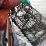 Hummer fischen Hummerkorb Tiiner Hummersafari