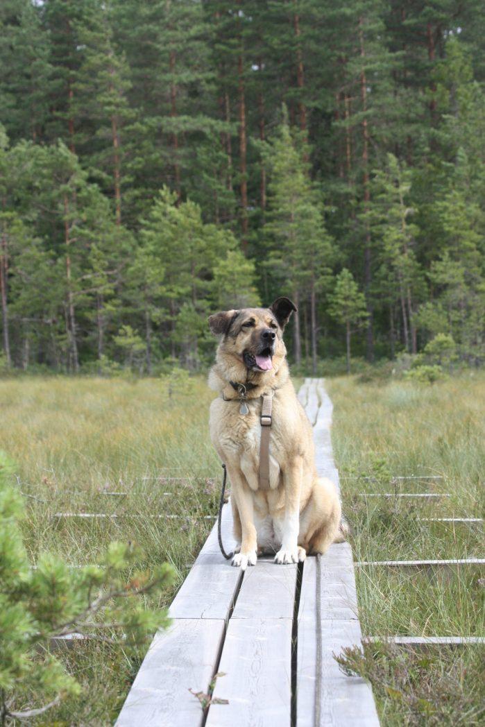 Urlaub mit Hund ©Czastrau