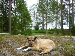 Schweden mit Hund ©Czastrau