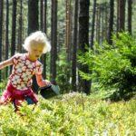 Blaubeeren pflücken Schweden