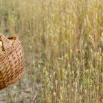 Pilze pflücken Jedermannsrecht