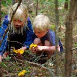 Pilze sammeln Jedermannsrecht