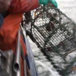 Artikel Hummer fischen