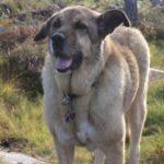Artikel Urlaub mit Hund Schweden