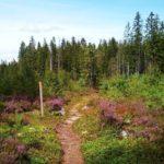 Wanderweg Schweden