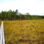 Wanderweg Lappland