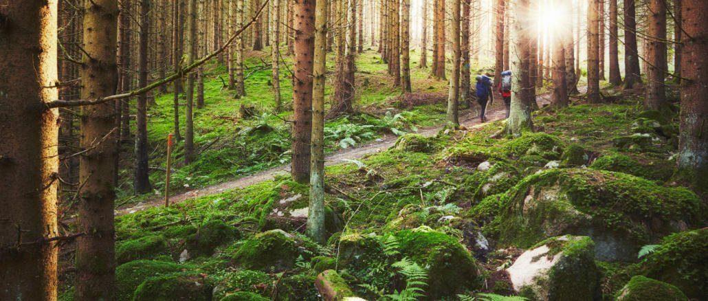 Wandern in Småland